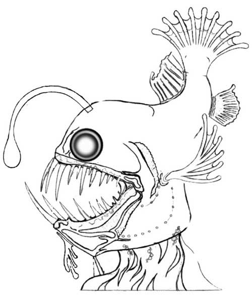 deep sea animals coloring pages - photo#10